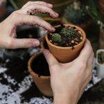 Ktoré črepníkové rastliny sú do bytu najvhodnejšie?